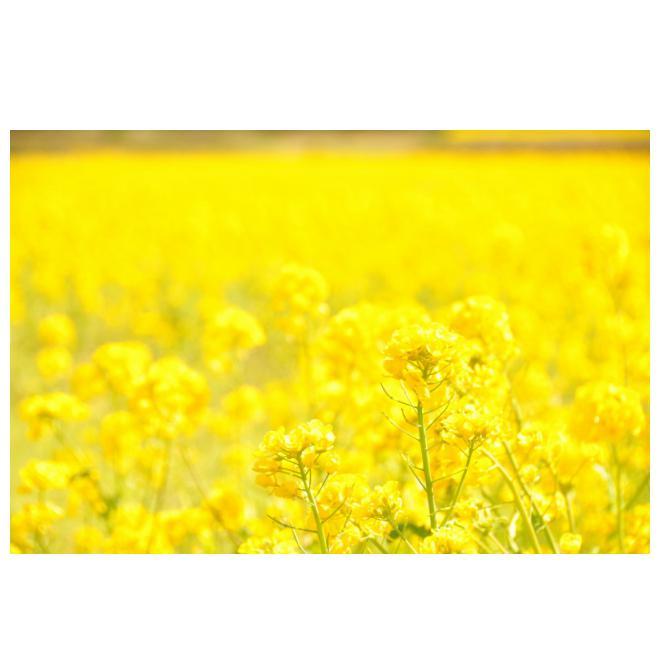 どこまでも、どこまでも春の色
