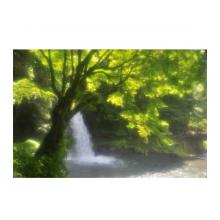 水玉から産まれた樹
