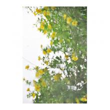 波紋の中の花